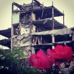 Photo of roses in foreground at demolition of 3400 Montrose, 2014